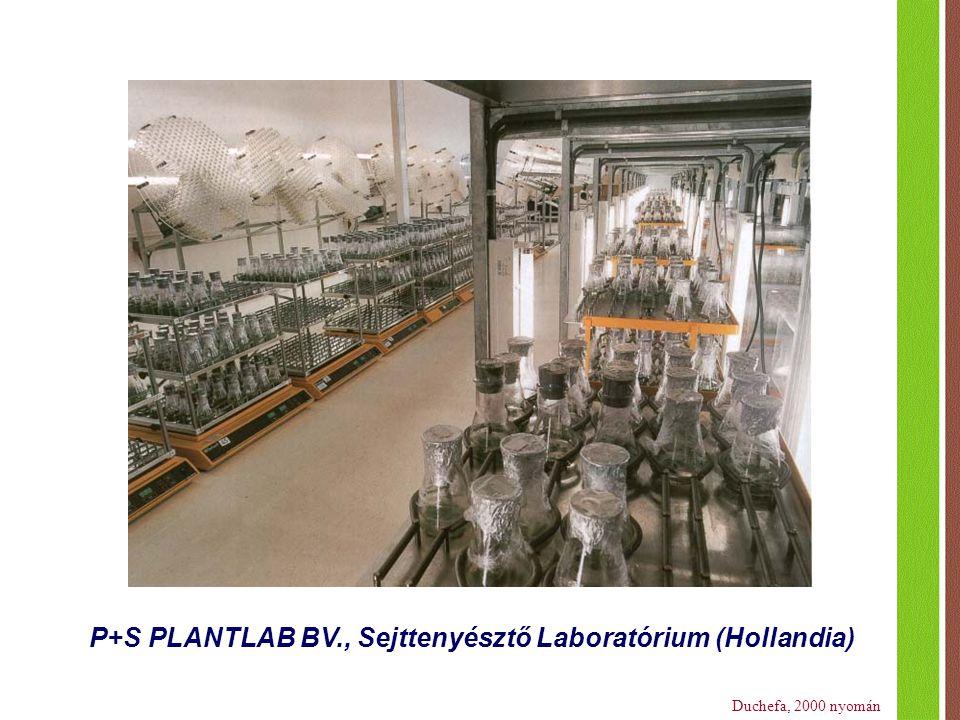 P+S PLANTLAB BV., Sejttenyésztő Laboratórium (Hollandia)