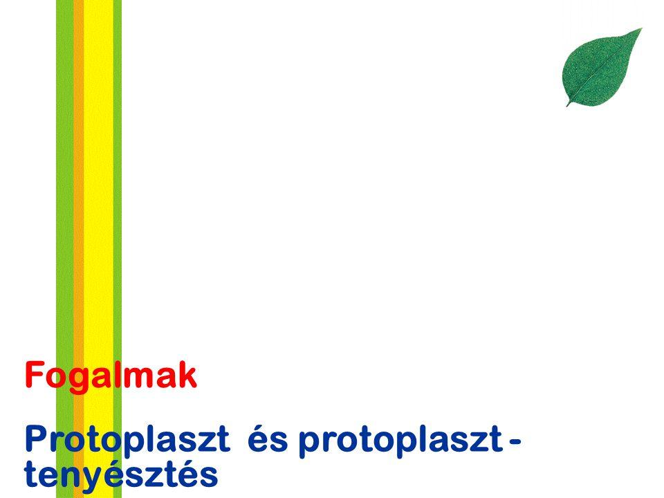 Fogalmak Protoplaszt és protoplaszt - tenyésztés