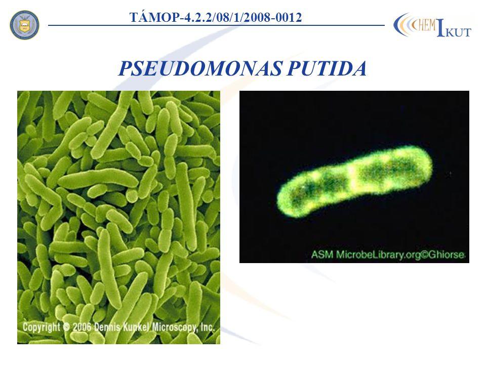 TÁMOP-4.2.2/08/1/2008-0012 PSEUDOMONAS PUTIDA
