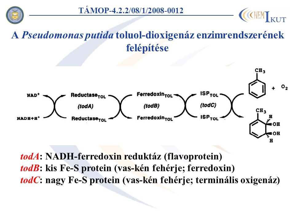 A Pseudomonas putida toluol-dioxigenáz enzimrendszerének felépítése