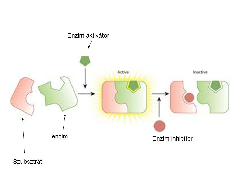 Enzim aktivátor enzim Enzim inhibítor Szubsztrát 47