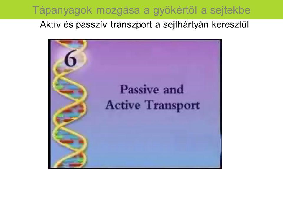 Tápanyagok mozgása a gyökértől a sejtekbe