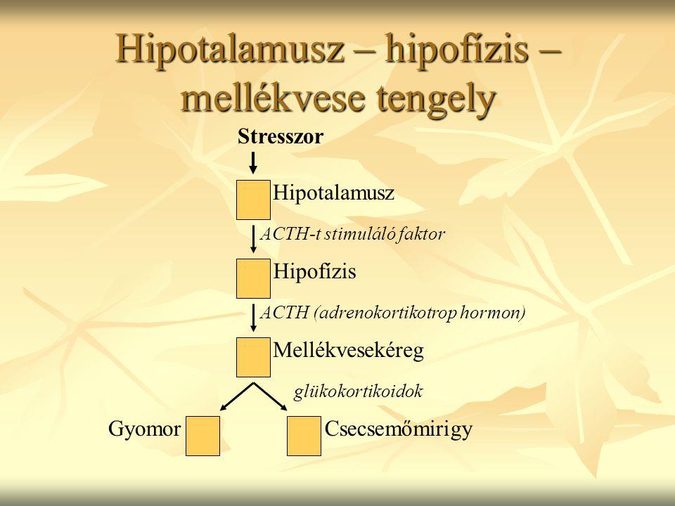 Hipotalamusz – hipofízis – mellékvese tengely