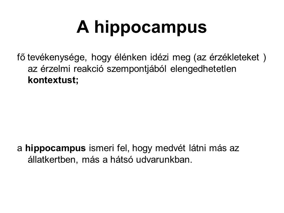 A hippocampus fő tevékenysége, hogy élénken idézi meg (az érzékleteket ) az érzelmi reakció szempontjából elengedhetetlen kontextust;