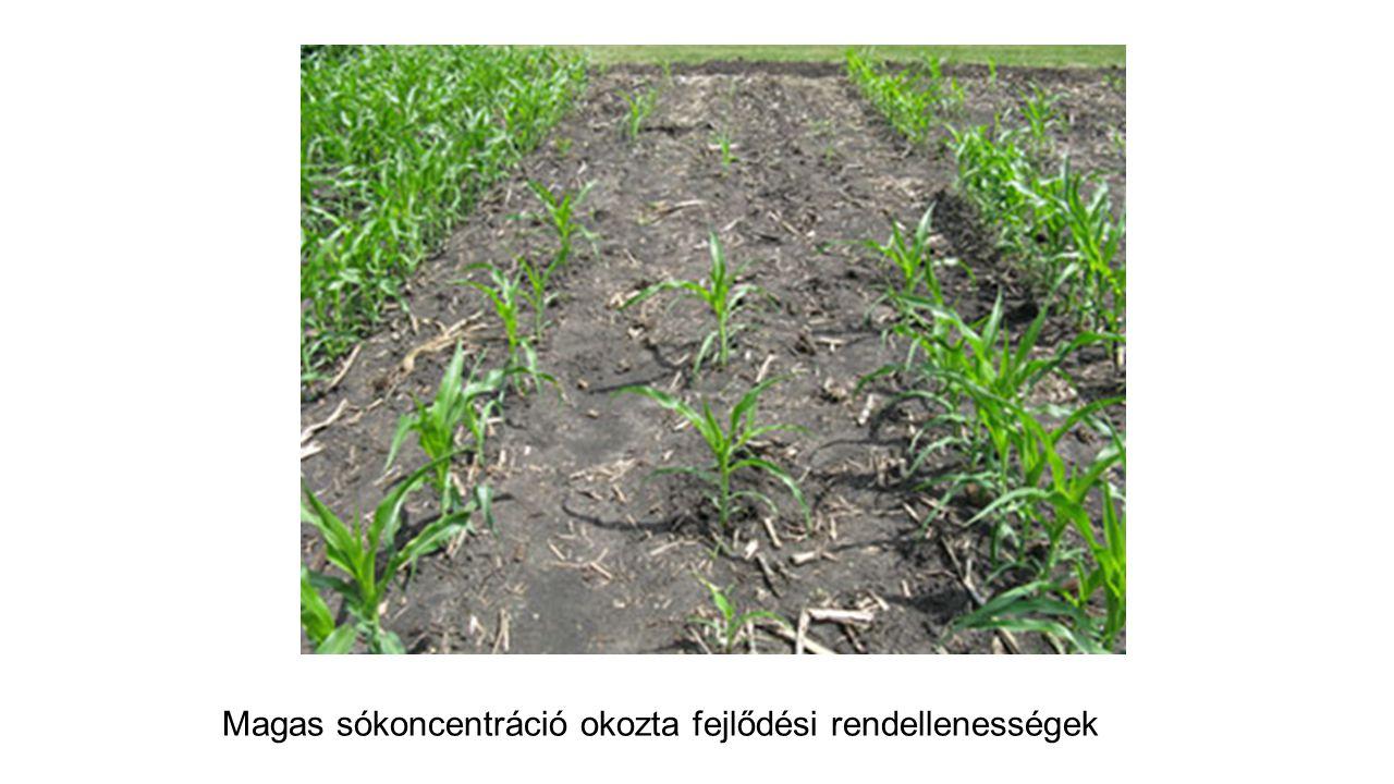 Magas sókoncentráció okozta fejlődési rendellenességek