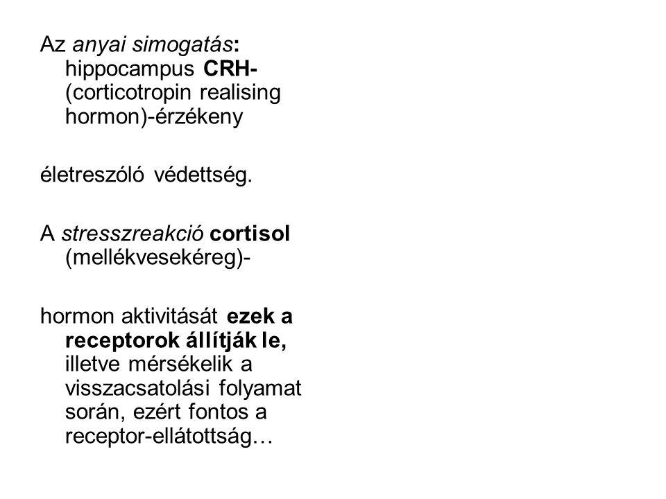 Az anyai simogatás: hippocampus CRH-(corticotropin realising hormon)-érzékeny