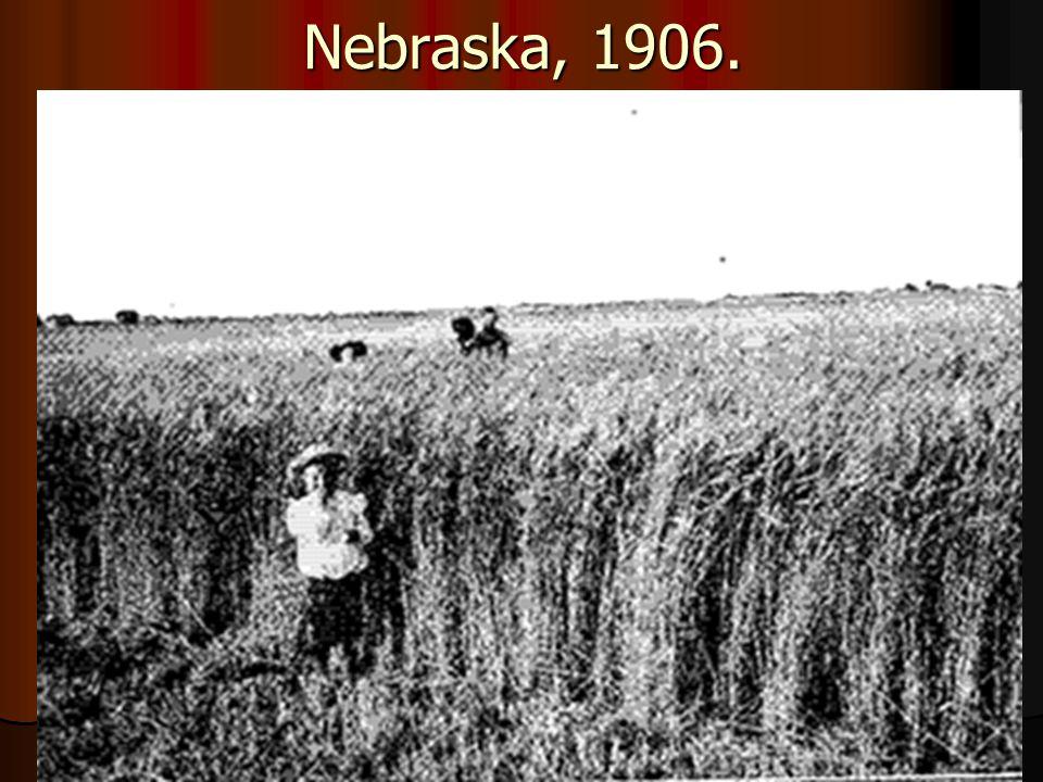 Nebraska, 1906. Őszi búza,
