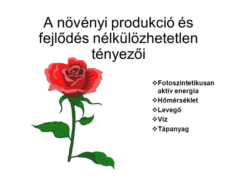 A növényi produkció és fejlődés nélkülözhetetlen tényezői
