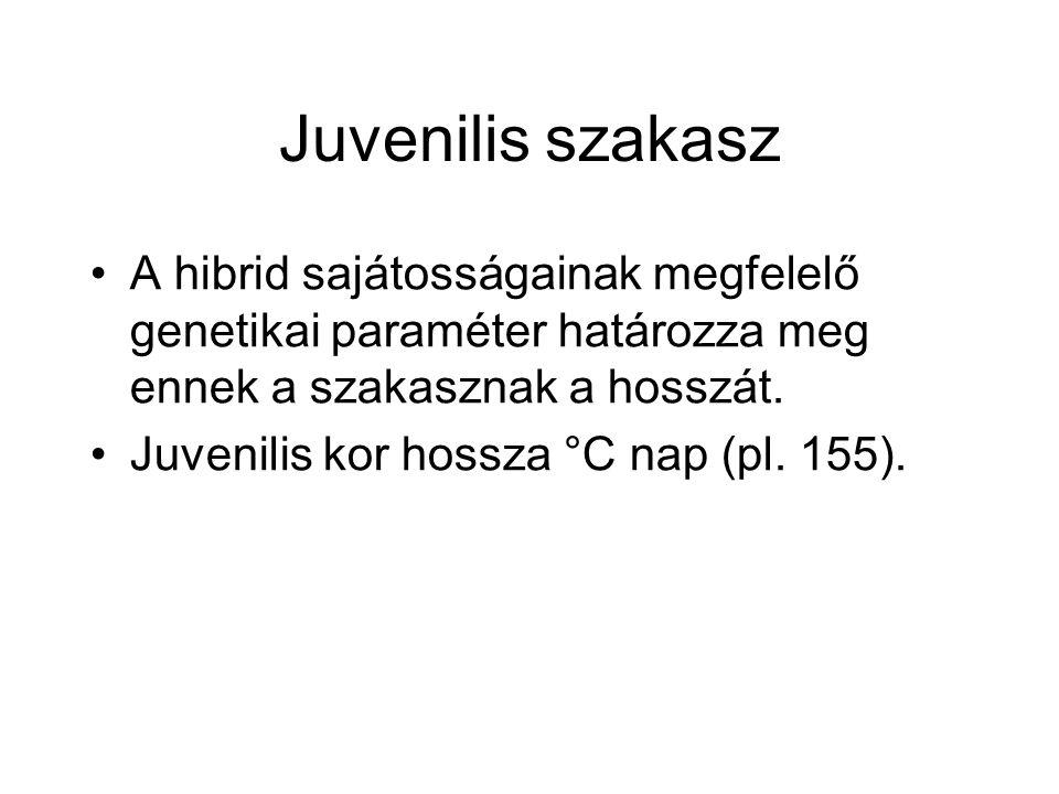Juvenilis szakasz A hibrid sajátosságainak megfelelő genetikai paraméter határozza meg ennek a szakasznak a hosszát.