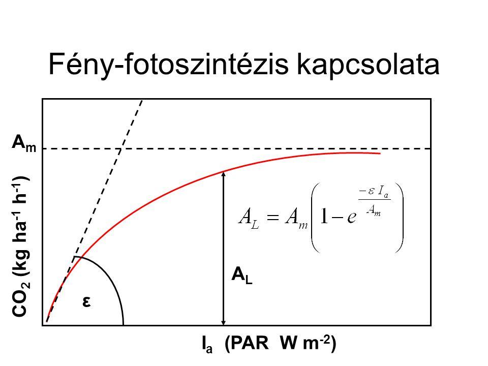Fény-fotoszintézis kapcsolata