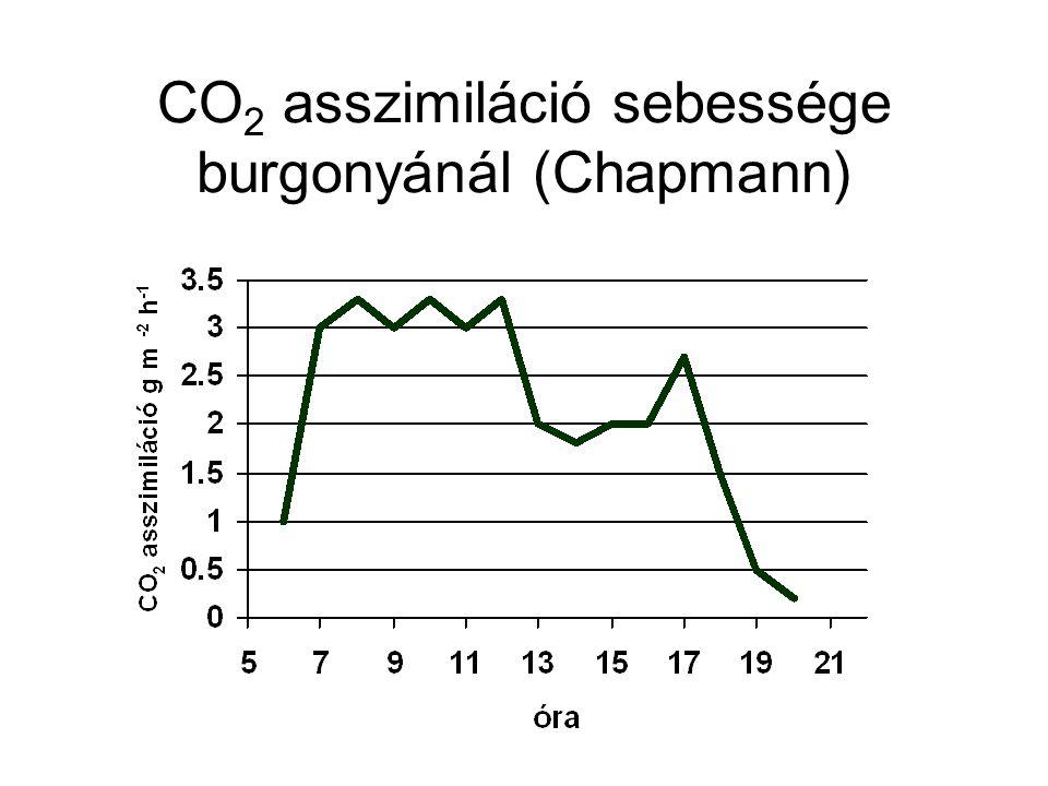 CO2 asszimiláció sebessége burgonyánál (Chapmann)