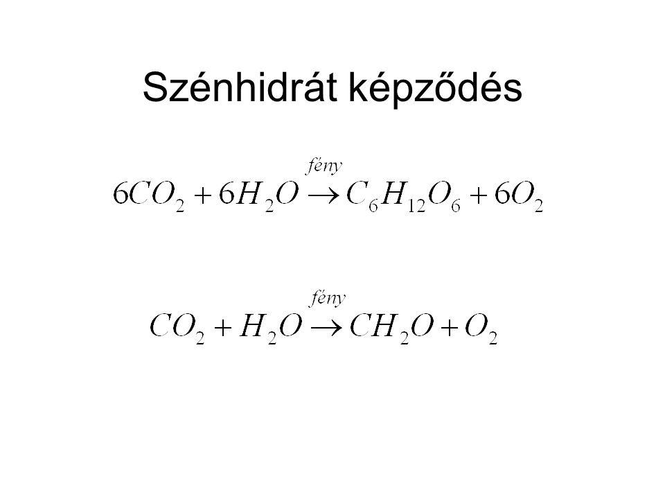 Szénhidrát képződés Minden kg megkötött CO2-ből 30/44 kg szénhidrát képződik, a molekula tömegek arányában.