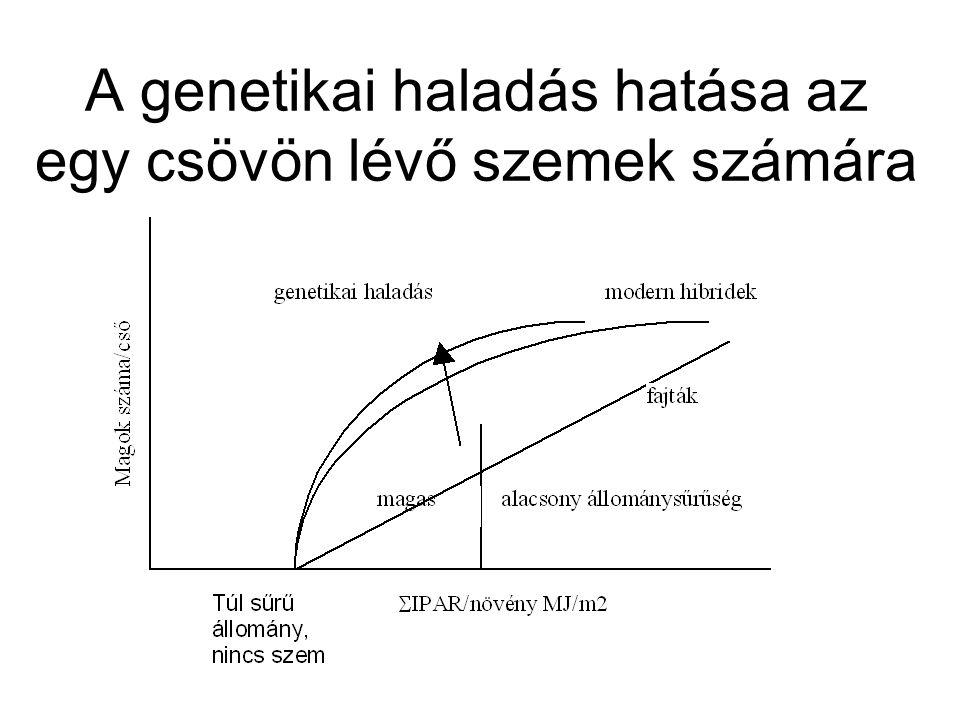 A genetikai haladás hatása az egy csövön lévő szemek számára