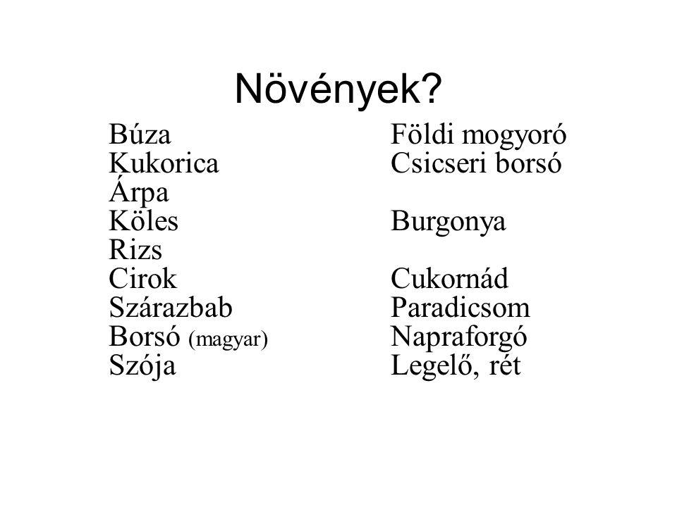 Növények Búza Kukorica Árpa Köles Rizs Cirok Szárazbab Borsó (magyar)