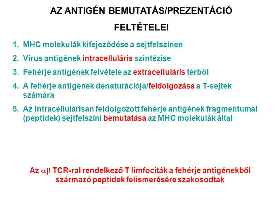 AZ ANTIGÉN BEMUTATÁS/PREZENTÁCIÓ