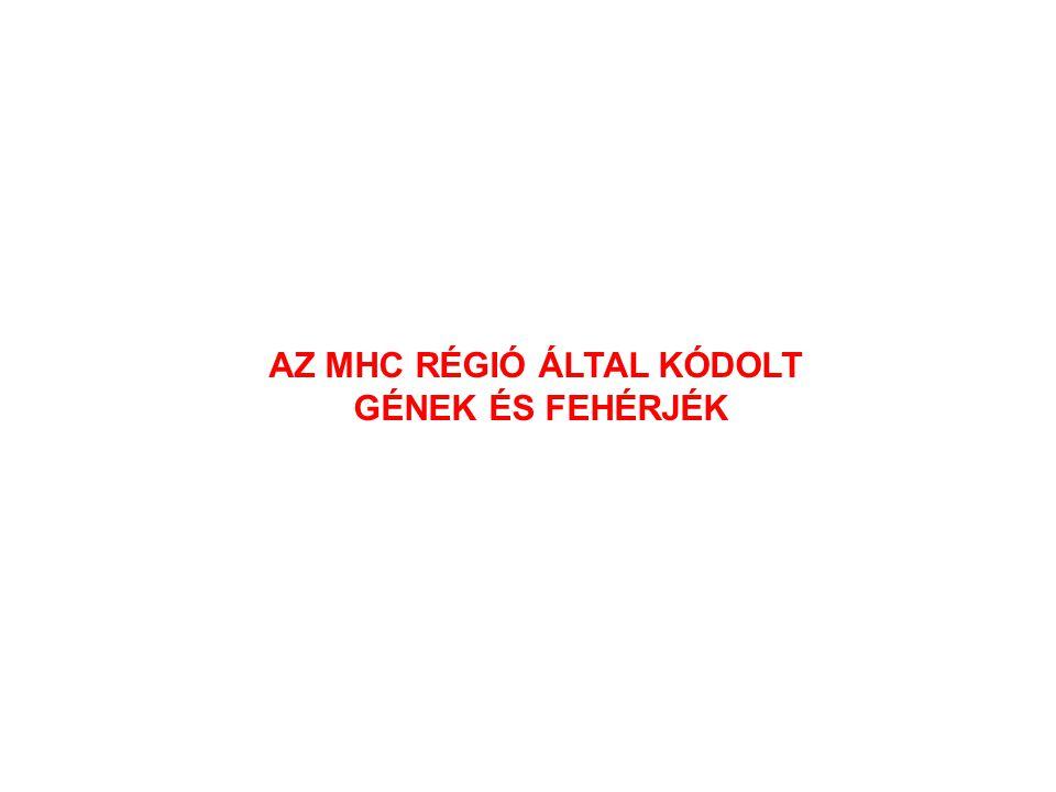 AZ MHC RÉGIÓ ÁLTAL KÓDOLT