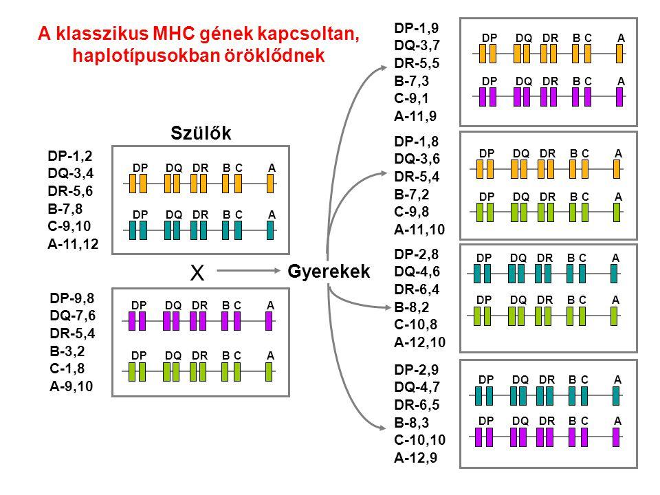 A klasszikus MHC gének kapcsoltan, haplotípusokban öröklődnek