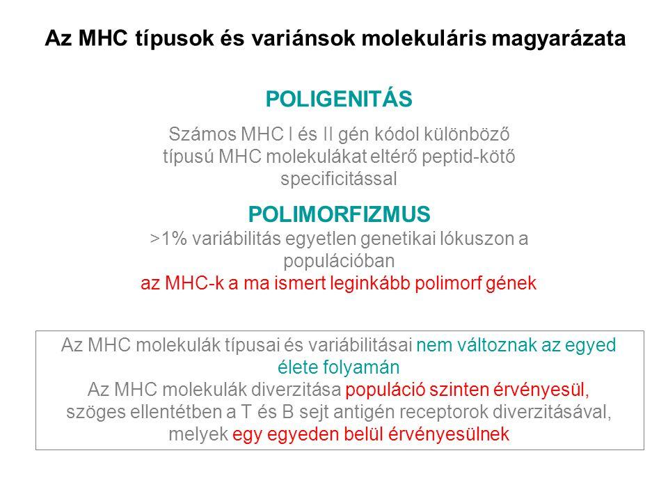 Az MHC típusok és variánsok molekuláris magyarázata