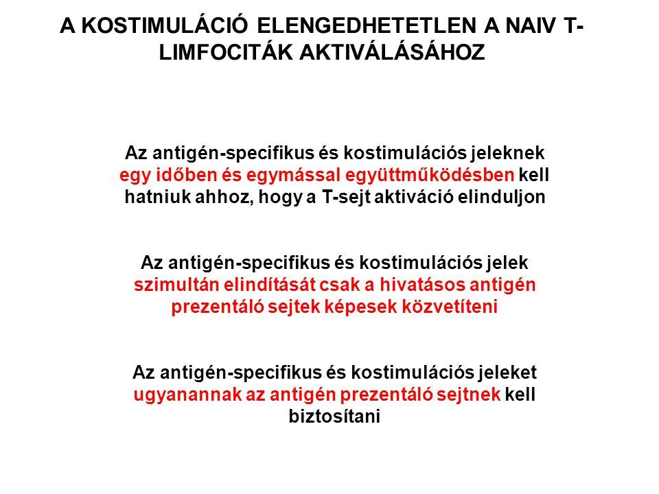 A KOSTIMULÁCIÓ ELENGEDHETETLEN A NAIV T-LIMFOCITÁK AKTIVÁLÁSÁHOZ