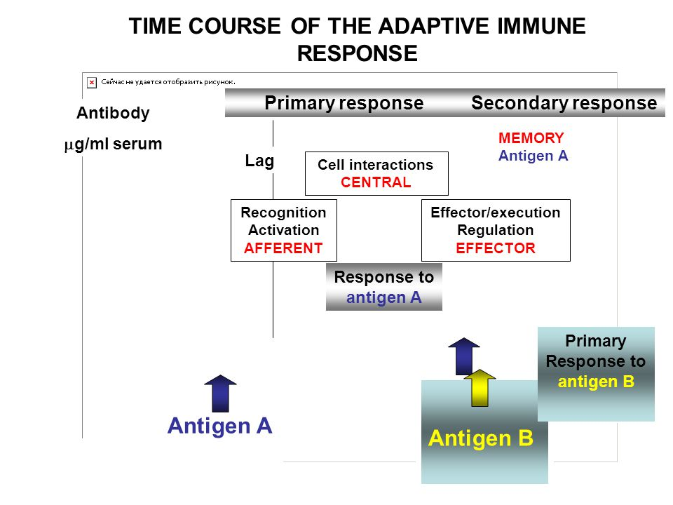 TIME COURSE OF THE ADAPTIVE IMMUNE RESPONSE