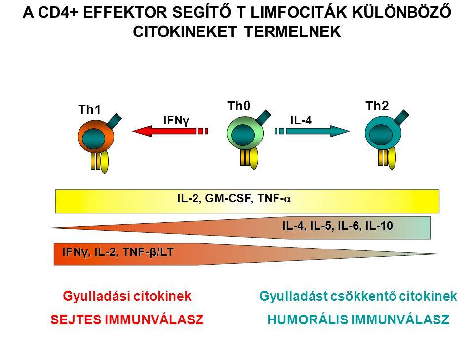 A CD4+ EFFEKTOR SEGÍTŐ T LIMFOCITÁK KÜLÖNBÖZŐ CITOKINEKET TERMELNEK