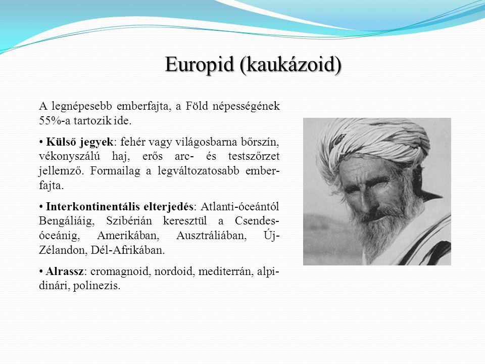 Europid (kaukázoid) A legnépesebb emberfajta, a Föld népességének 55%-a tartozik ide.