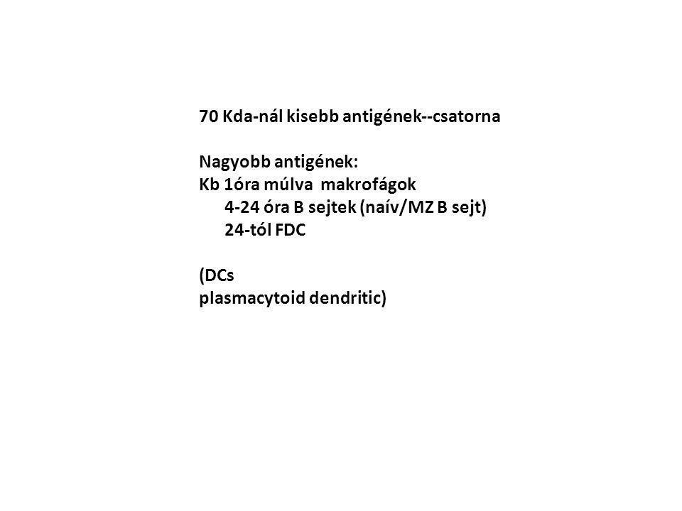 70 Kda-nál kisebb antigének--csatorna