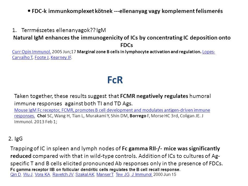  FDC-k immunkomplexet kötnek ---ellenanyag vagy komplement felismerés