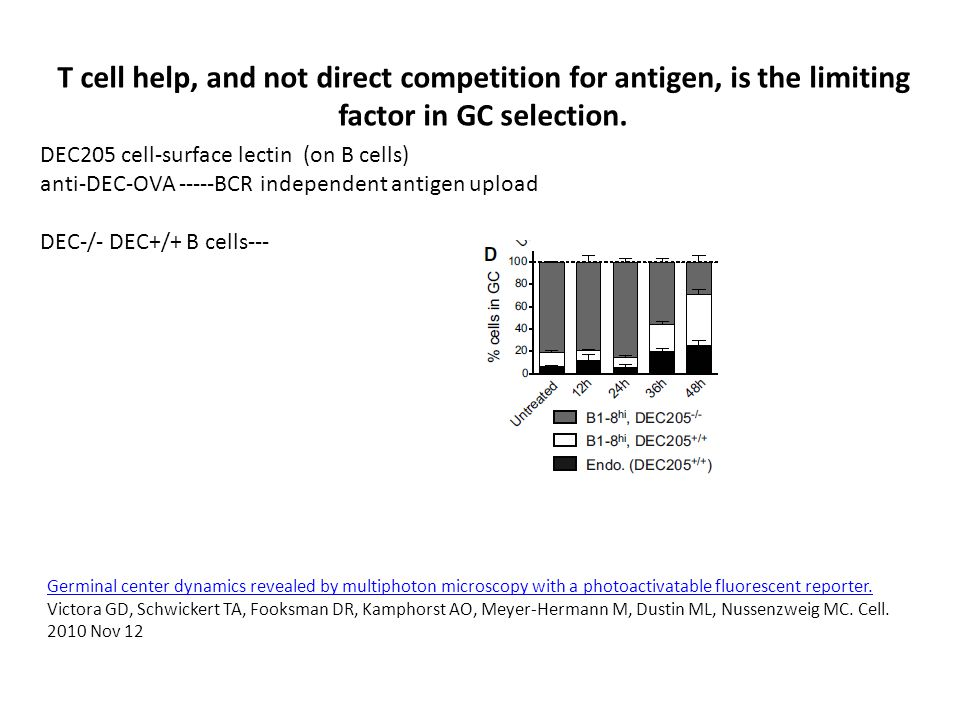 T cell help, and not direct competition for antigen, is the limiting factor in GC selection.
