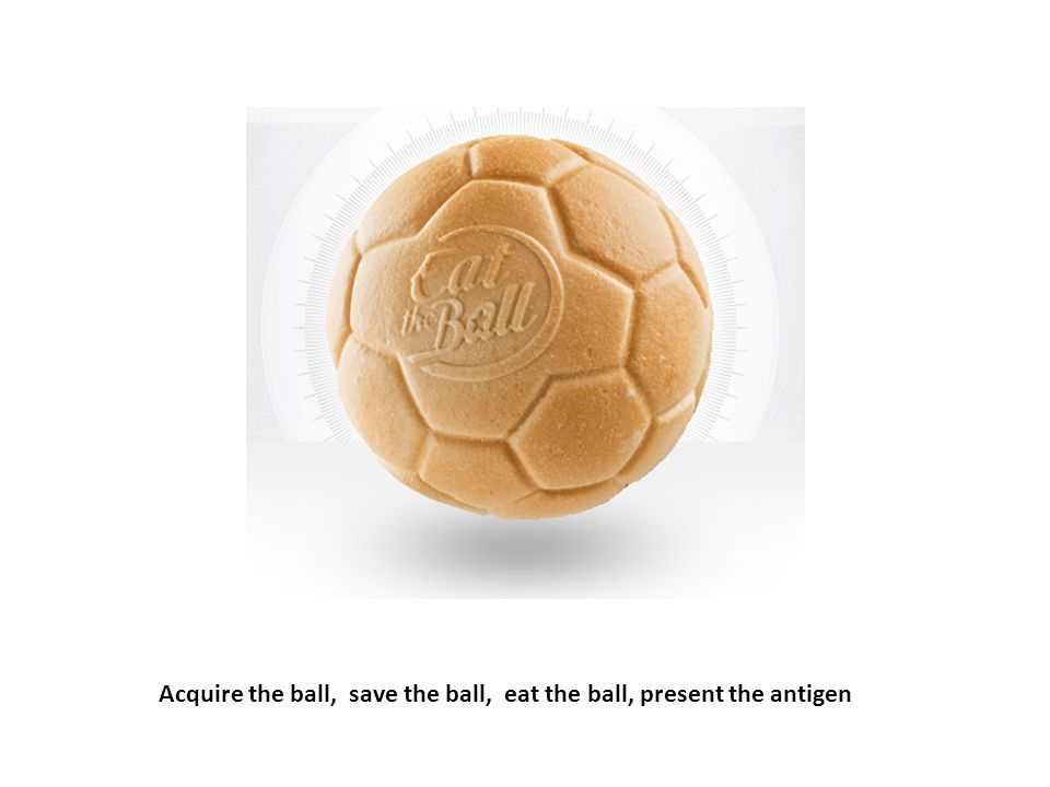 Acquire the ball, save the ball, eat the ball, present the antigen