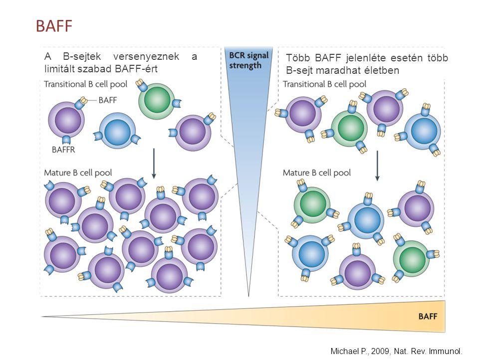 BAFF A B-sejtek versenyeznek a limitált szabad BAFF-ért
