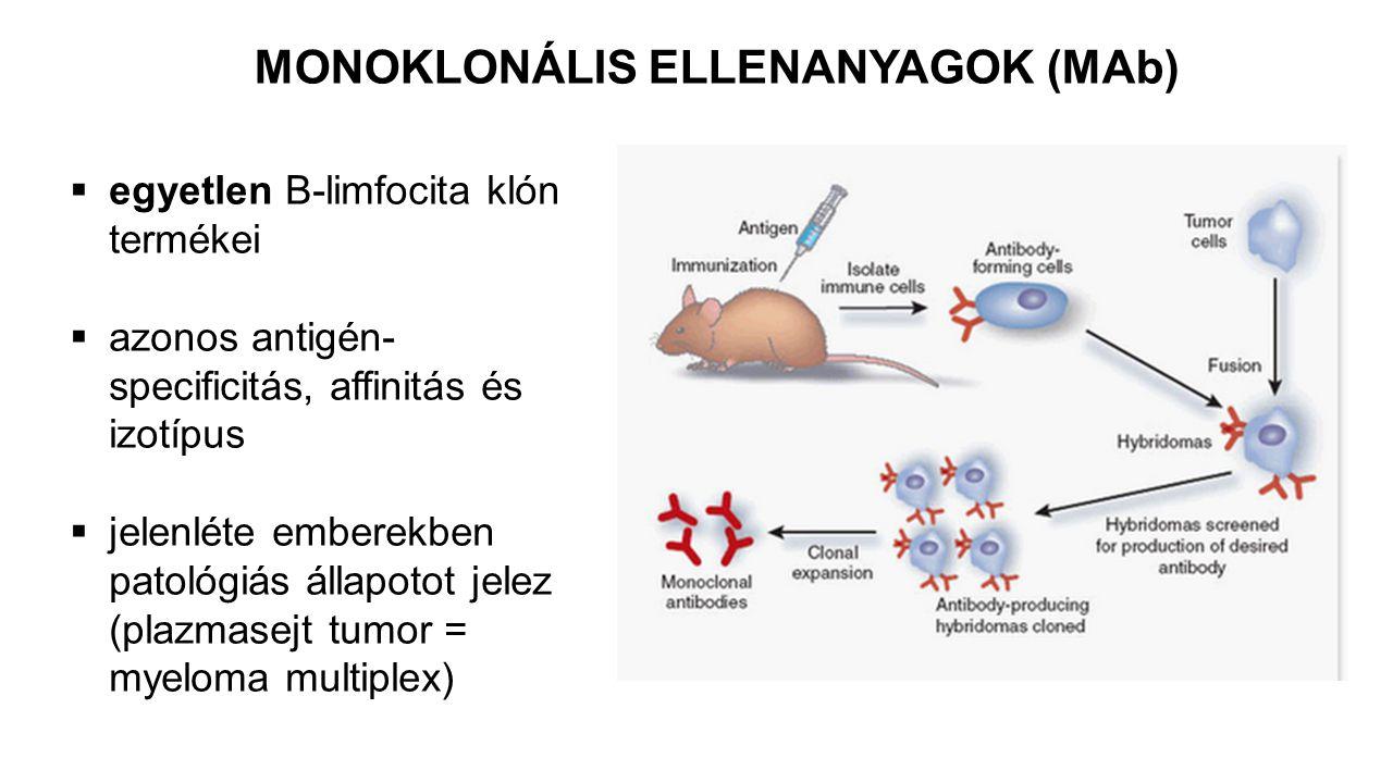 MONOKLONÁLIS ELLENANYAGOK (MAb)
