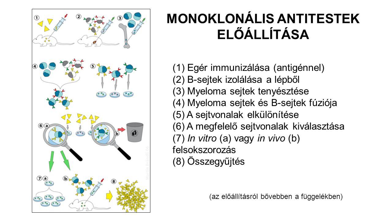 MONOKLONÁLIS ANTITESTEK ELŐÁLLÍTÁSA