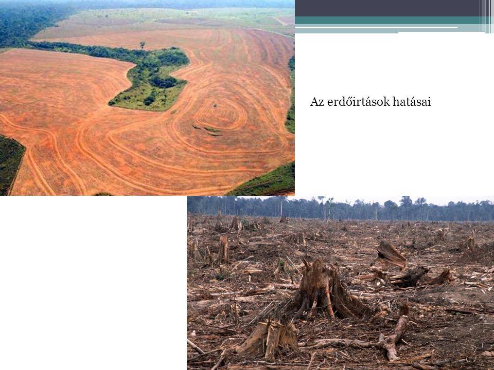 Az erdőirtások hatásai