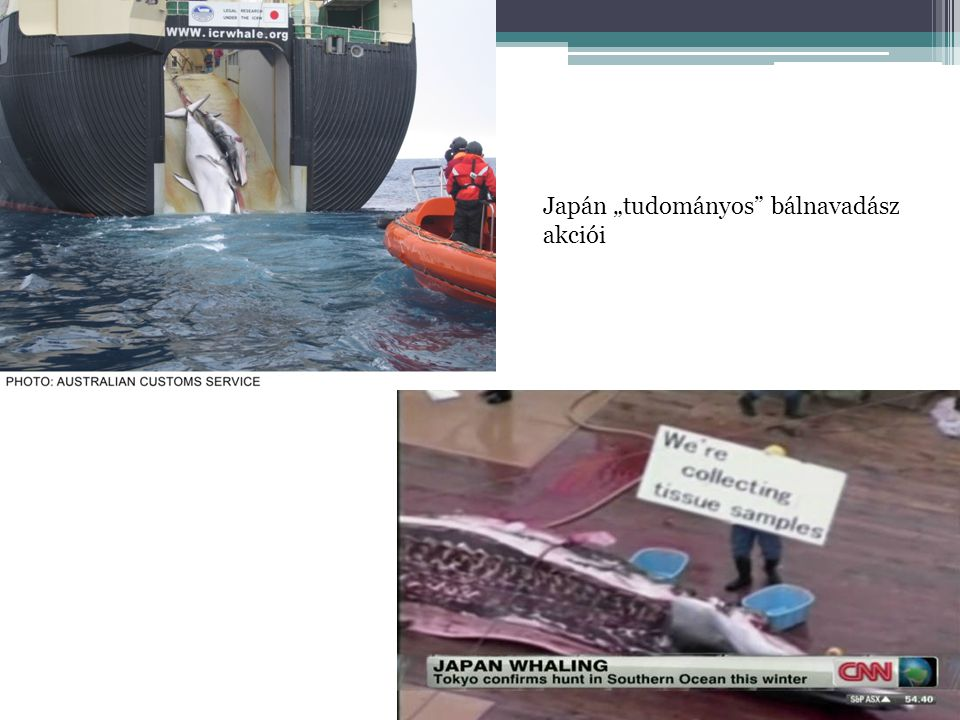 """Japán """"tudományos bálnavadász akciói"""