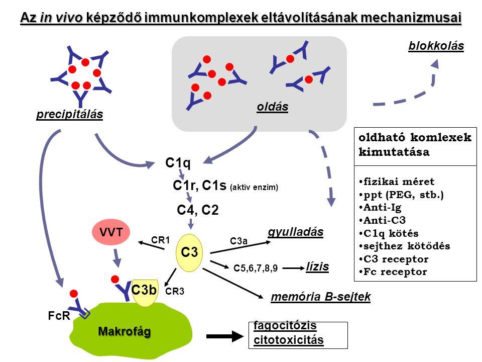Y Az in vivo képződő immunkomplexek eltávolításának mechanizmusai C1q