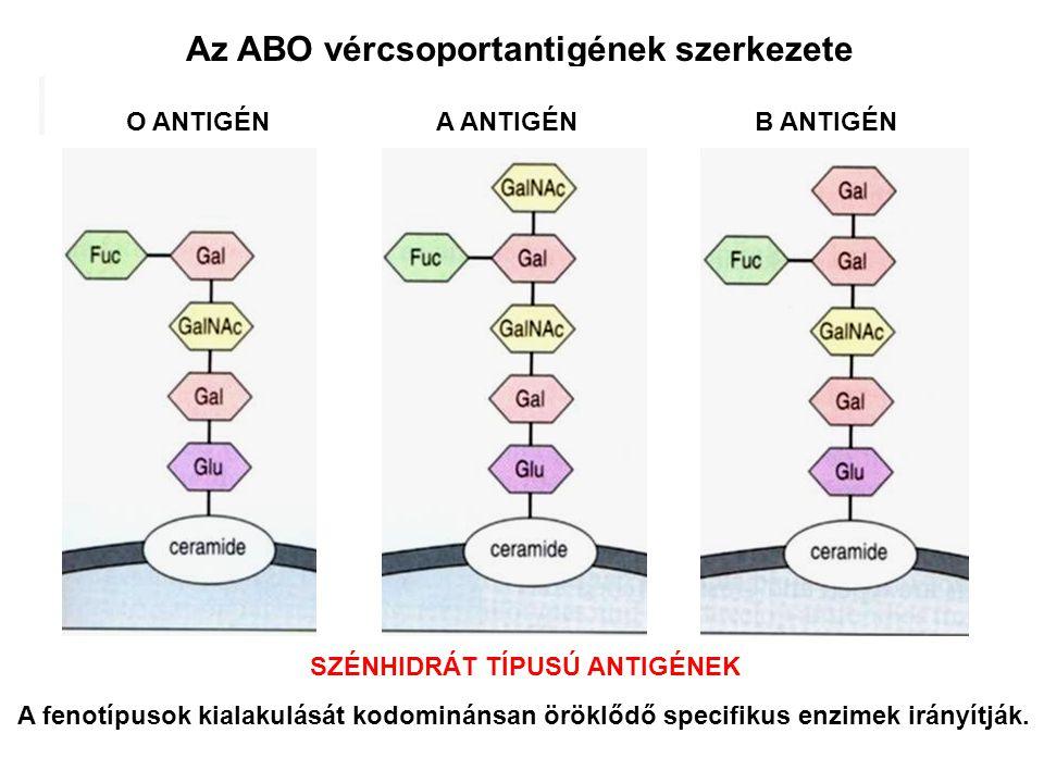 Az ABO vércsoportantigének szerkezete