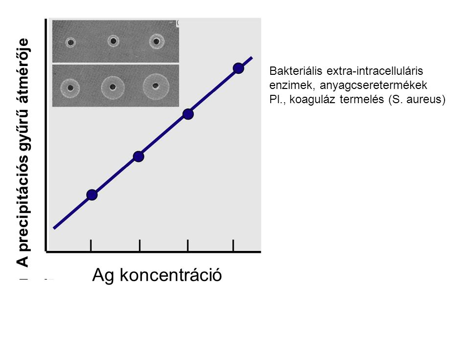 Ag koncentráció A precipitációs gyűrű átmérője