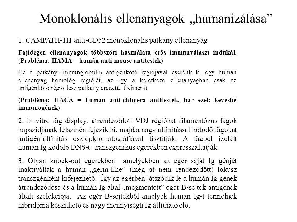 """Monoklonális ellenanyagok """"humanizálása"""