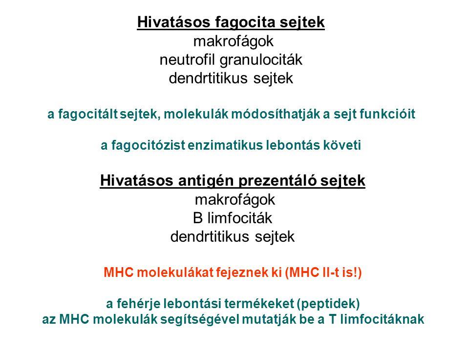 Hivatásos fagocita sejtek Hivatásos antigén prezentáló sejtek