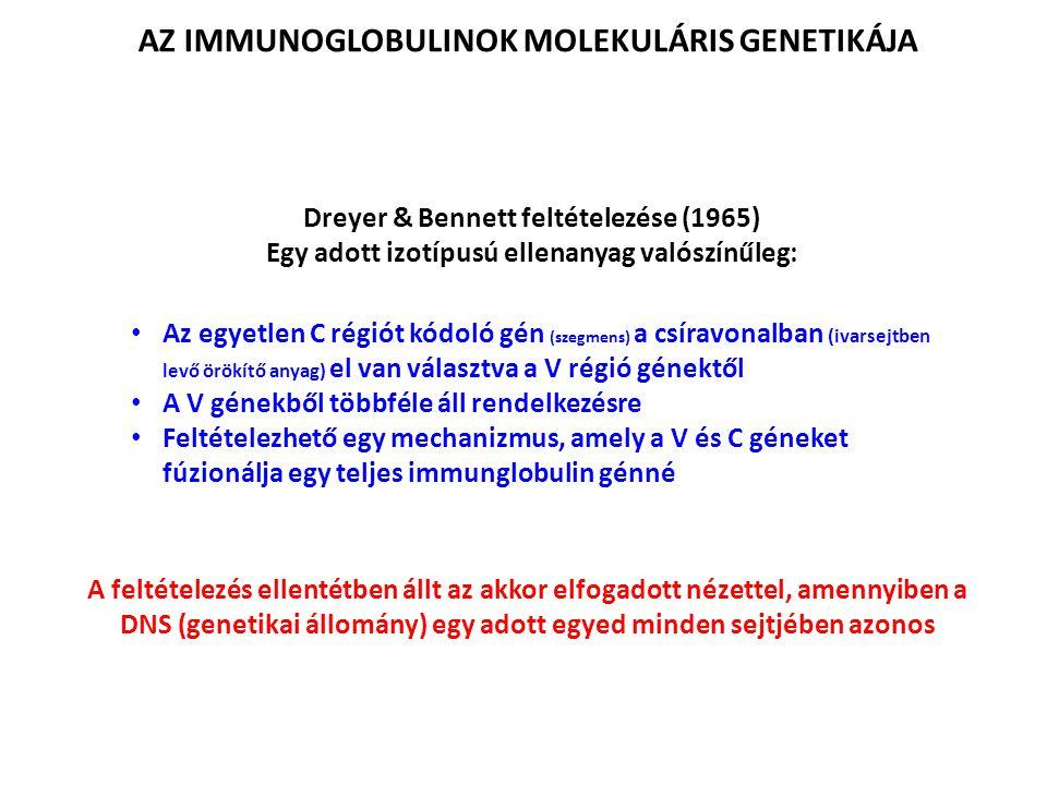 AZ IMMUNOGLOBULINOK MOLEKULÁRIS GENETIKÁJA