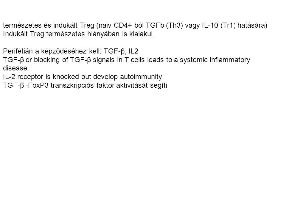 természetes és indukált Treg (naiv CD4+ ból TGFb (Th3) vagy IL-10 (Tr1) hatására)