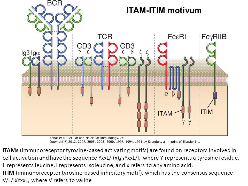 ITAM-ITIM motivum