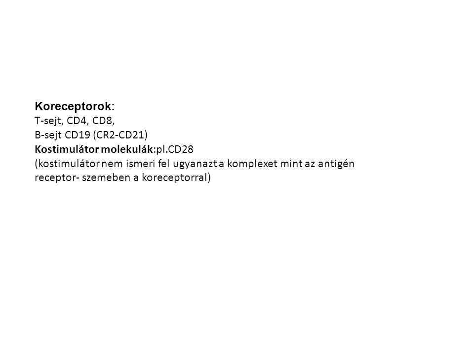 Koreceptorok: T-sejt, CD4, CD8, B-sejt CD19 (CR2-CD21) Kostimulátor molekulák:pl.CD28.