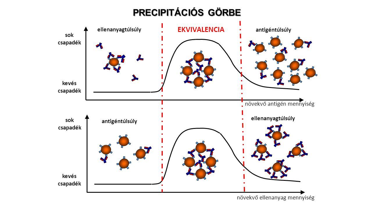 PRECIPITÁCIÓS GÖRBE EKVIVALENCIA növekvő antigén mennyiség
