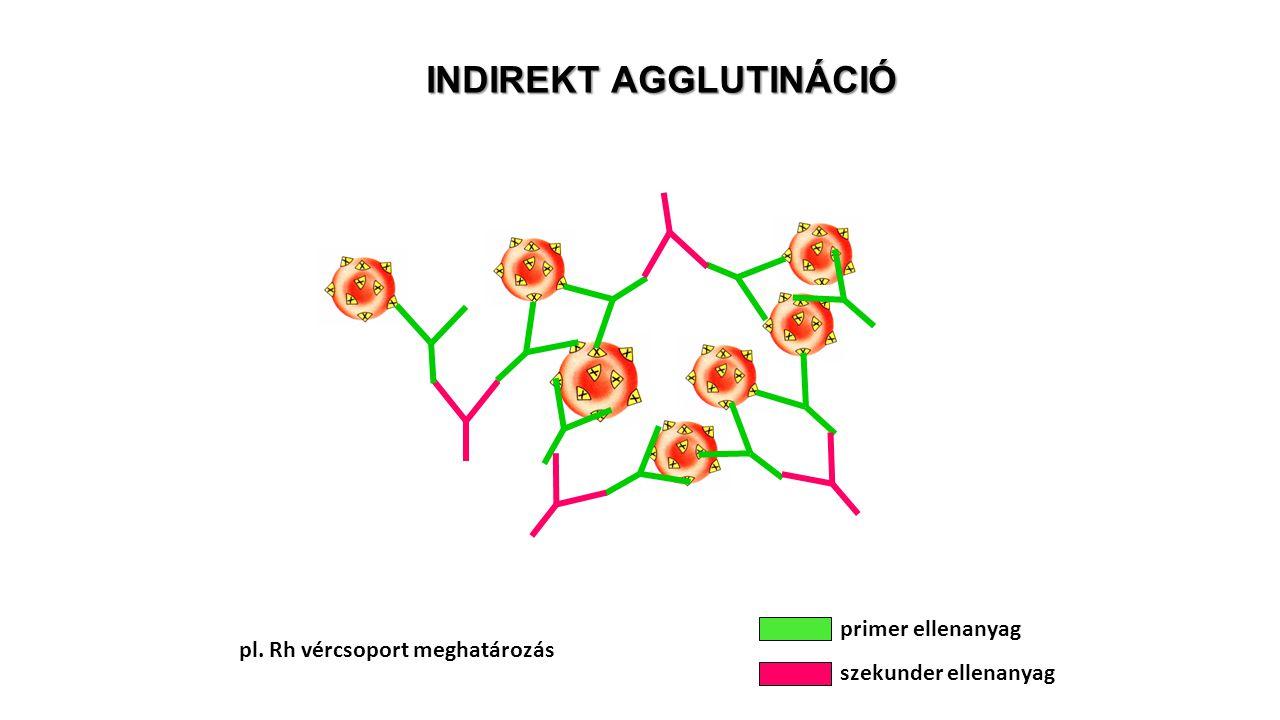 INDIREKT AGGLUTINÁCIÓ