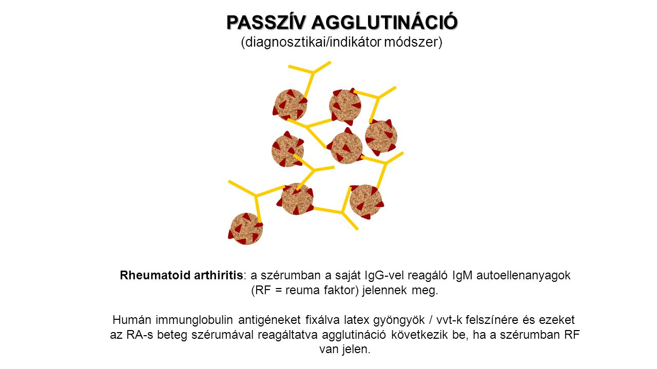 PASSZÍV AGGLUTINÁCIÓ (diagnosztikai/indikátor módszer)