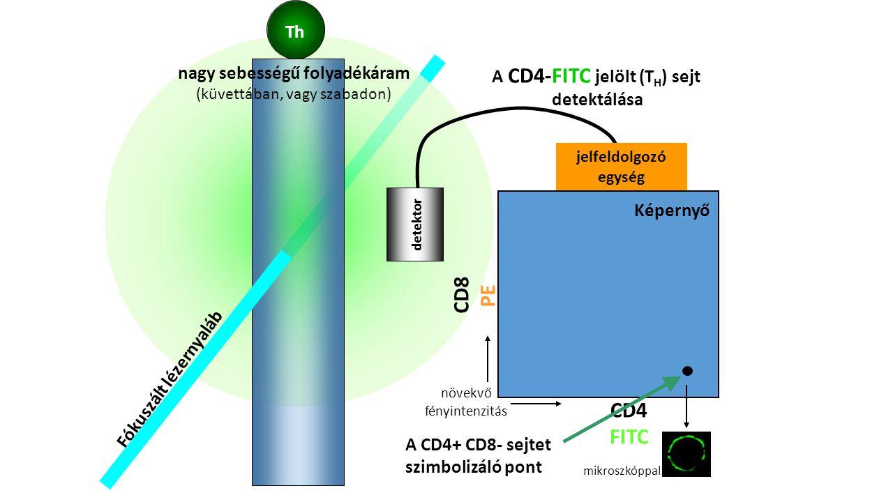 nagy sebességű folyadékáram A CD4-FITC jelölt (TH) sejt