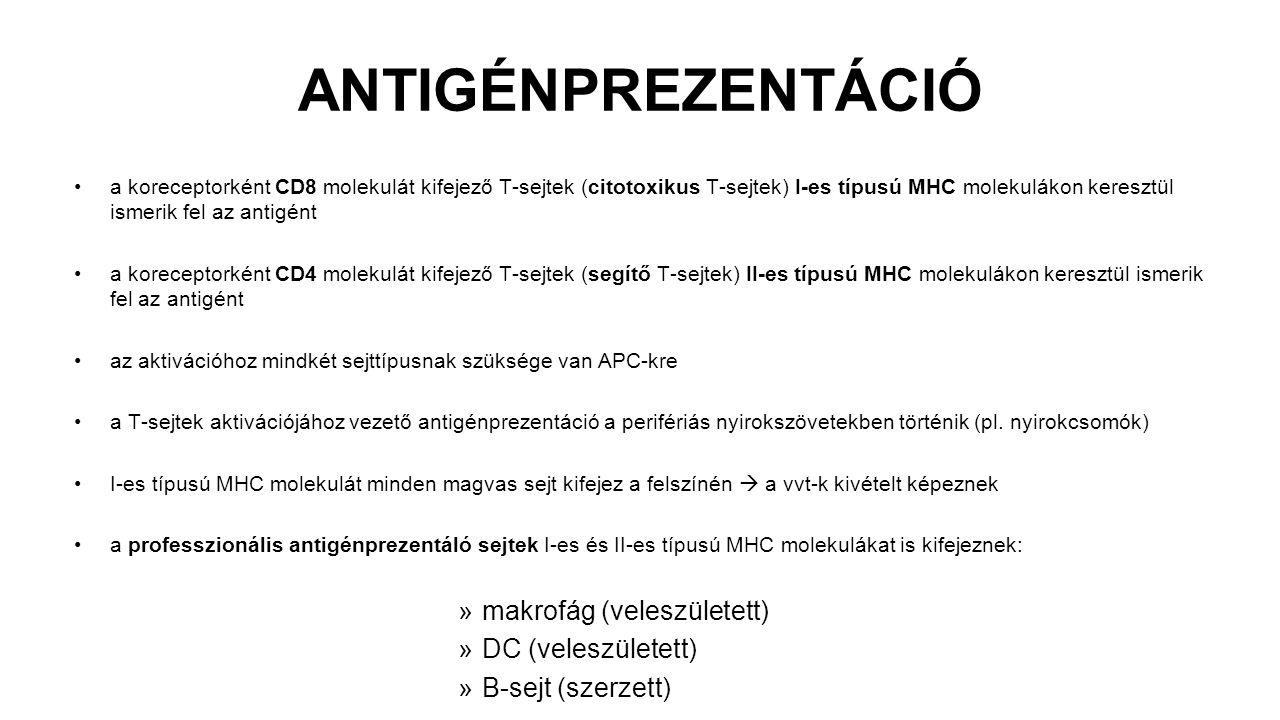 ANTIGÉNPREZENTÁCIÓ makrofág (veleszületett) DC (veleszületett)