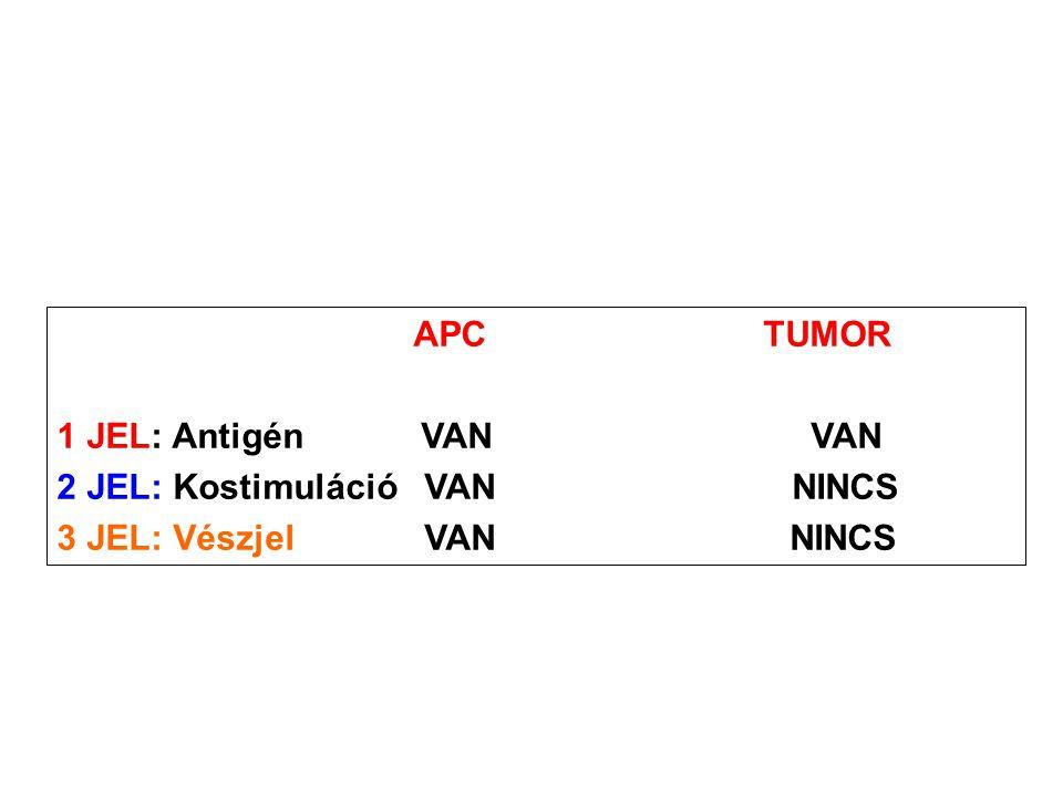 APC TUMOR 1 JEL: Antigén VAN VAN. 2 JEL: Kostimuláció VAN NINCS.